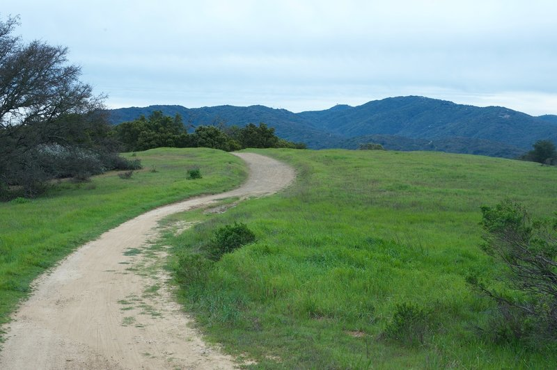 The trail moves through a small meadow between the chaparral and the woods.