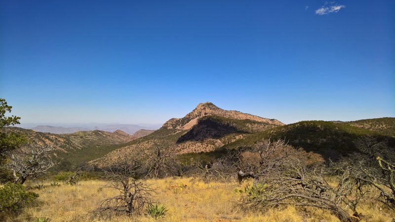 Emory Peak stands guard over the Chisos Basin in the background.