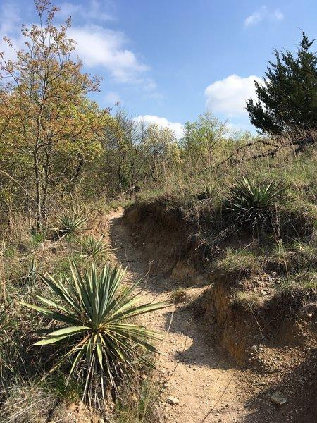 Yucca plants hug the trail.