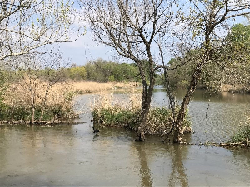 Where the eastern portion of Riverbottom Trail joins the western portion, enjoy a view of the water and an abundance of waterfowl.