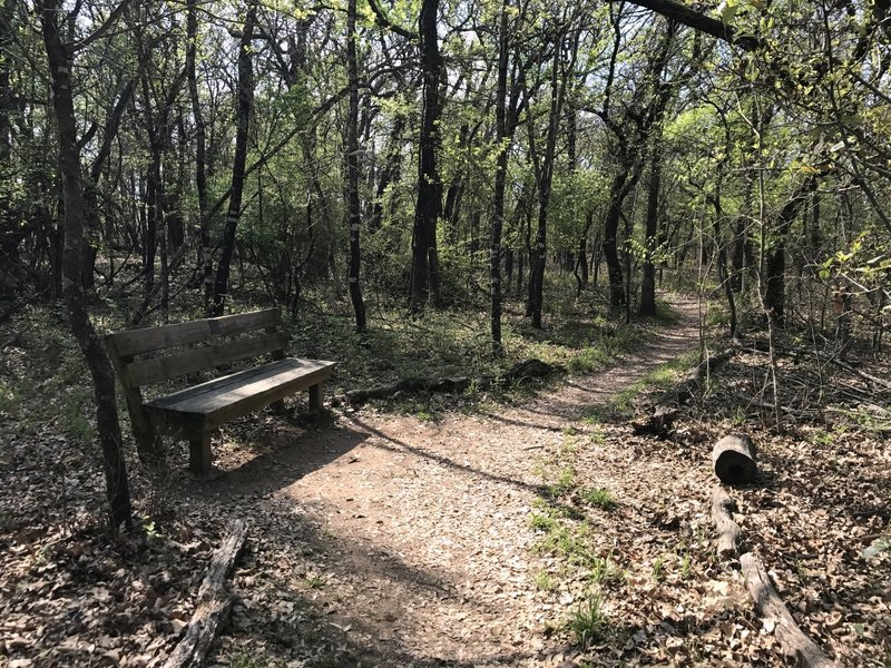 Numerous park benches let you sit and rest during a long hike in the woods.