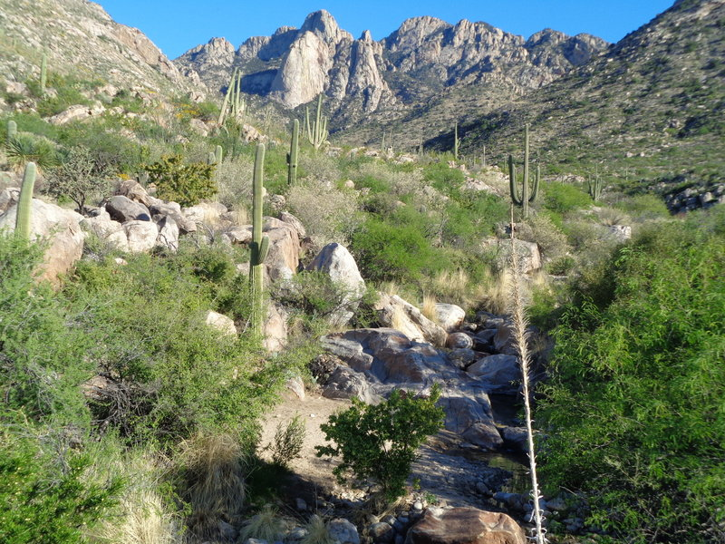 The scenery in Catalina State Park is sublime!