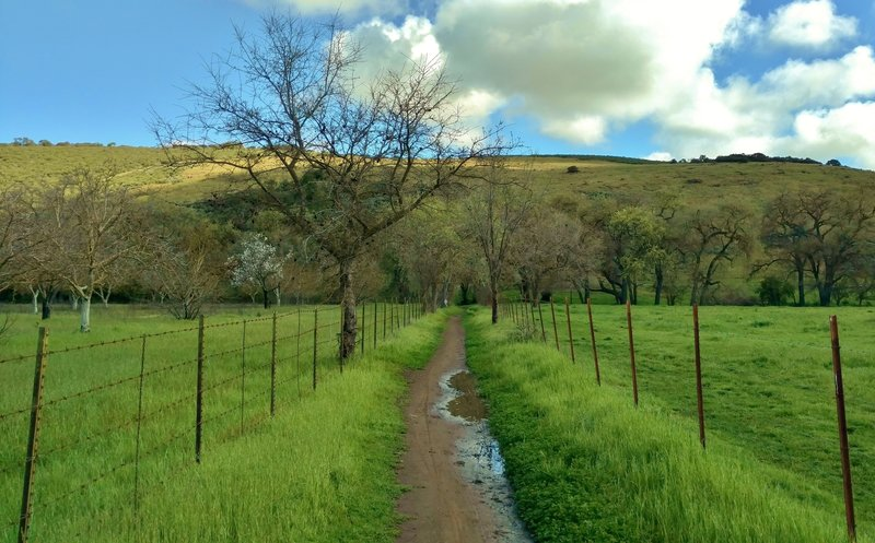 Enjoy verdant, spring scenery going to Santa Teresa County Park from Almaden Valley along the Calero Creek Trail.
