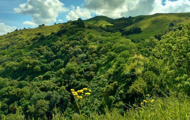 The Hidden Springs Trail offers great views of Coyote Peak across a wooded stream valley.