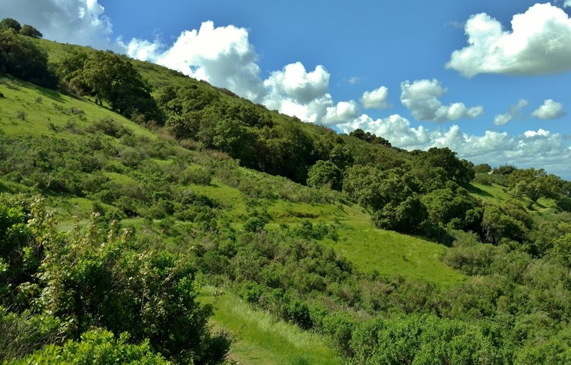 The Boundary Trail winds along a grass and brush-covered hillside.
