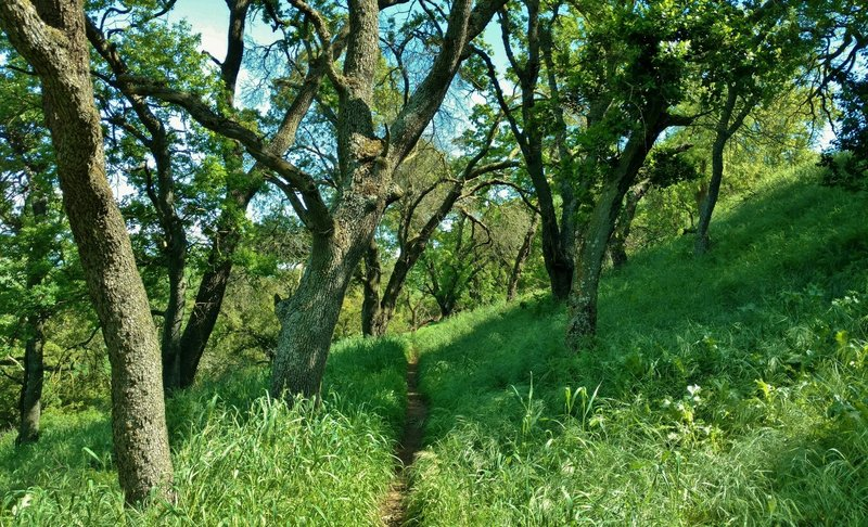 Parts of the Ohlone Trail are nice and shaded.