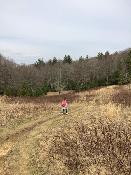The Boone Fork Trail heads into the meadow before diving back into the forest.