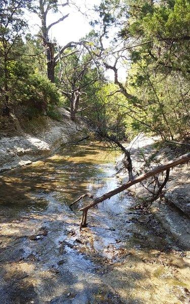 Tar Branch Creek is a wonderful trailside companion along its namesake trail.