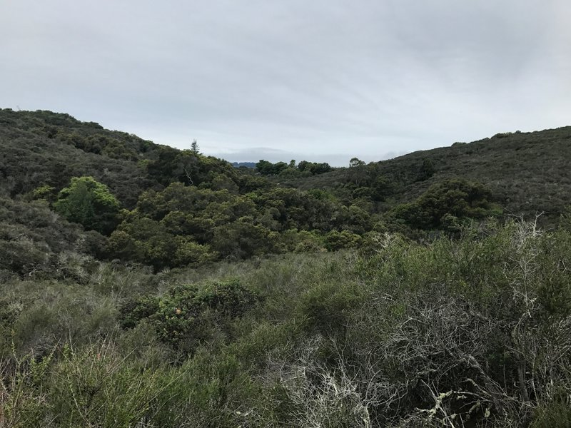 Views across the preserve are fleeting, but available along the Polly Geraci Trail.