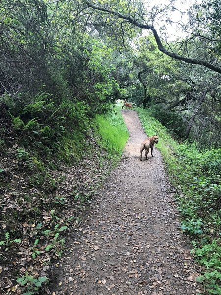 Dogs are allowed on the trail, although they should be on leash. There is a portion of the preserve for dogs to be off leash, but the Dusky-footed Woodrat Trail is outside that zone.