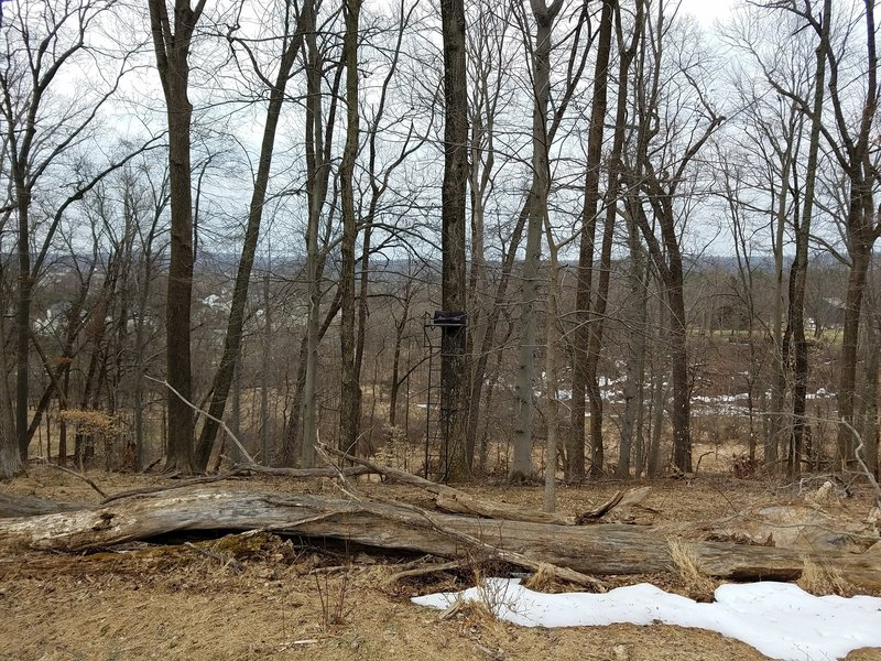 A tree stand can be seen just off trail.