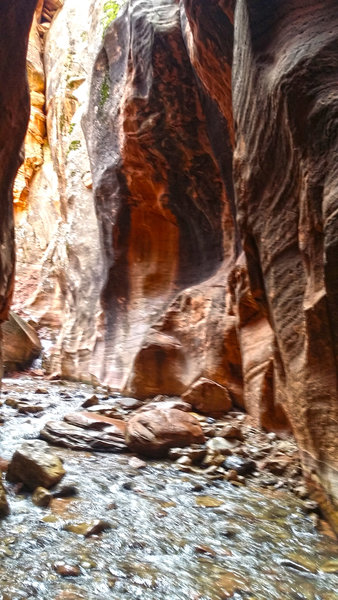 Shortly after you enter the slot canyon, your only option is to get your feet wet.