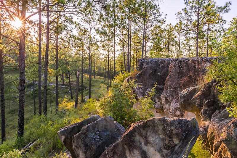Experience a beautiful Kisatchie vista from the Longleaf Vista Interpretive Trail.