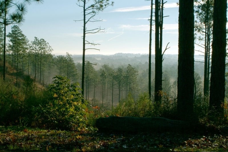 Soak up your surroundings from Longleaf Vista, Kisatchie National Forest.