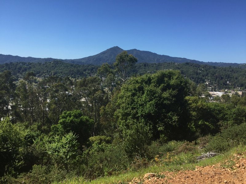 From the trail, take time to look over downtown San Rafael and Mt. Tam.