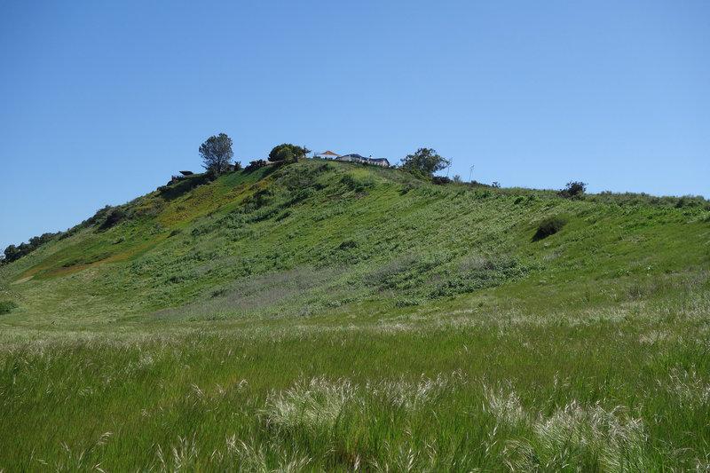 Verdant hillside in San Clemente Canyon.