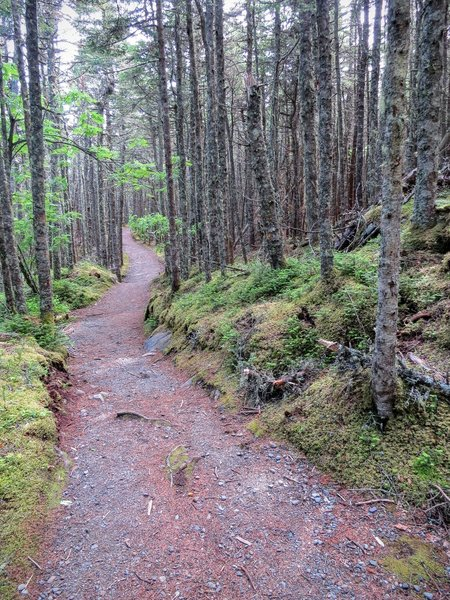 The Inland Trail at Quoddy Head State Park is beautifully built and easy to navigate.
