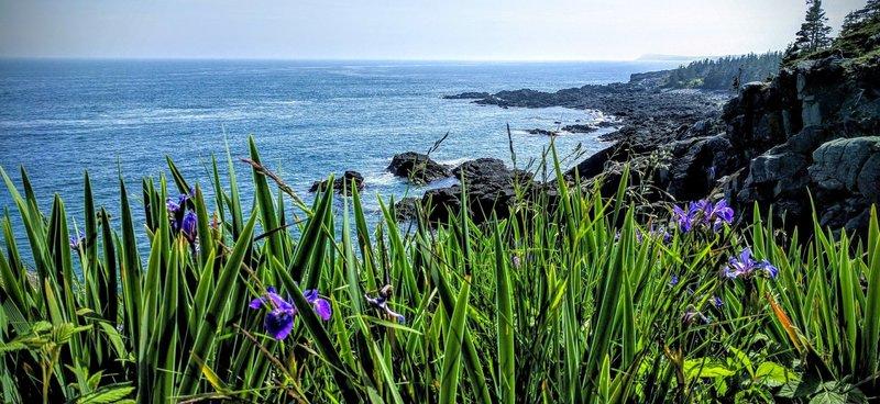 Summer Flowers adorn Coastal Maine.