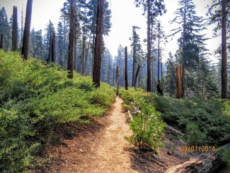 The Outer Loop Trail follows beautiful singletrack through Mariposa Grove.