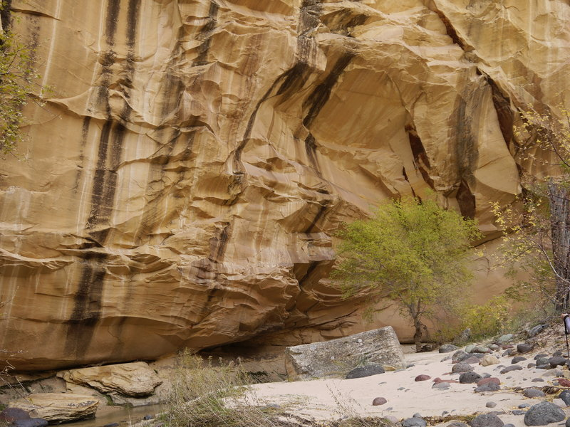 This beautiful sandstone alcove is worth checking out in Lower Death Hollow.