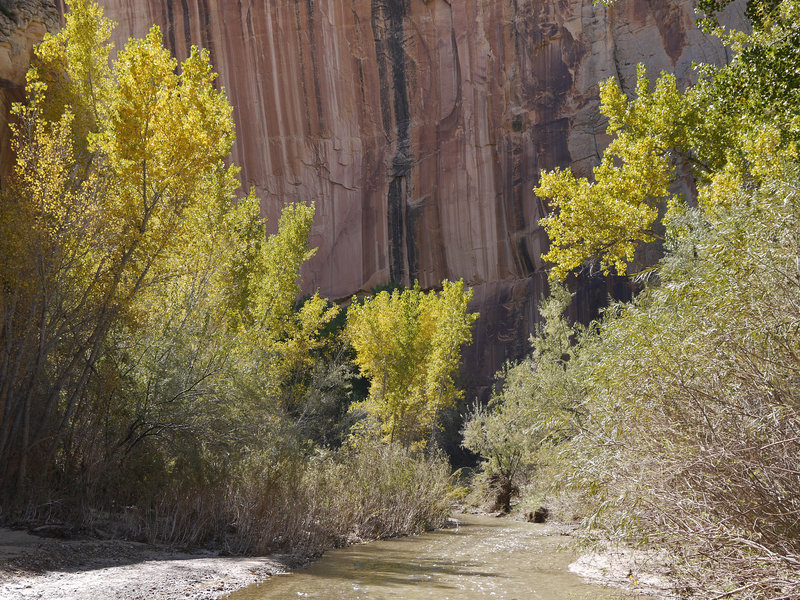 Autumn brings bold color to the Escalante River.