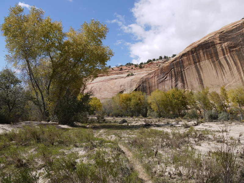 The Escalante Riverbed is nestled within these tall sandstone walls.