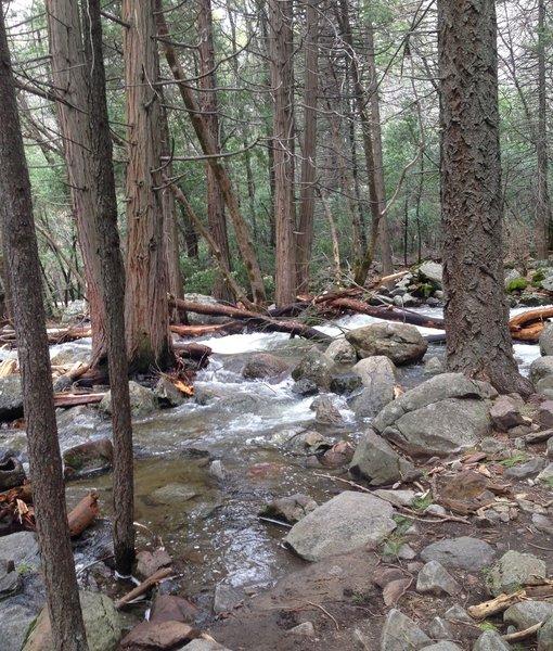 Water flows through dense forests at the base of Bridalveil Falls.