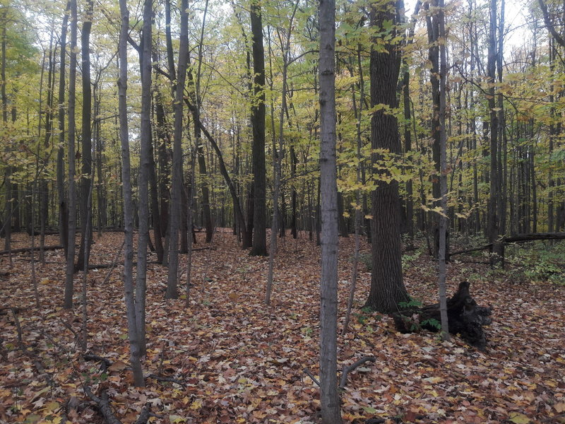 Freeman Preserve really shines in the fall.