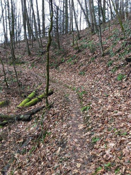 The Kanati Fork Trail switchbacks abundantly along its route near a few creeks.