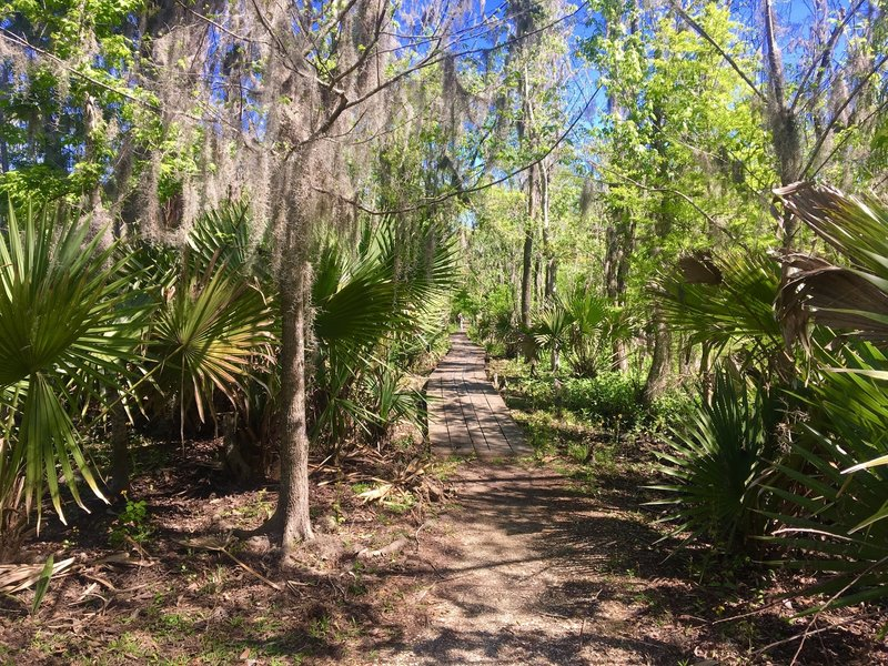 A palmetto alley adds a little excitement to the Ring Levee Trail.