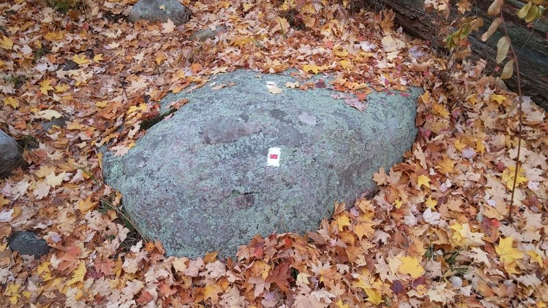Look for this distinct blaze to mark the Tuxedo - Mt. Ivy trail.