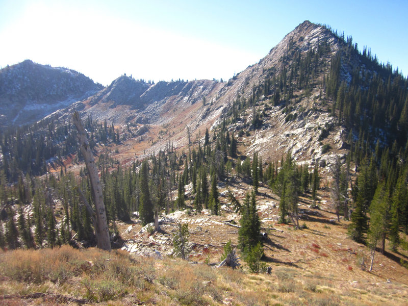 Rapid Peak (8,264') is just to the southwest of Buckhorn Summit.