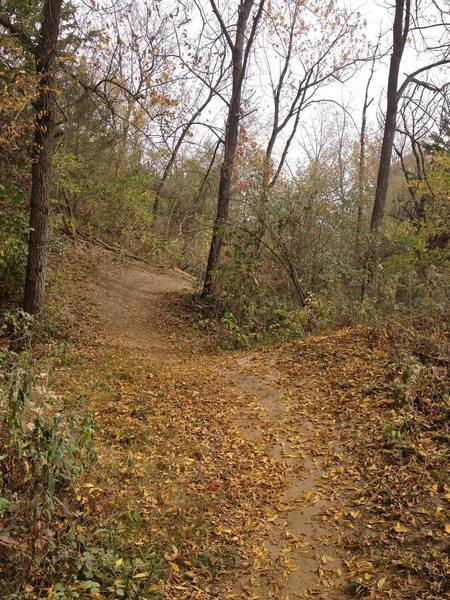 This is a typical hill on the Comer Pocket Trail.