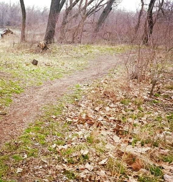 Enjoy pleasant forests near the river on the Sycamore Trail.