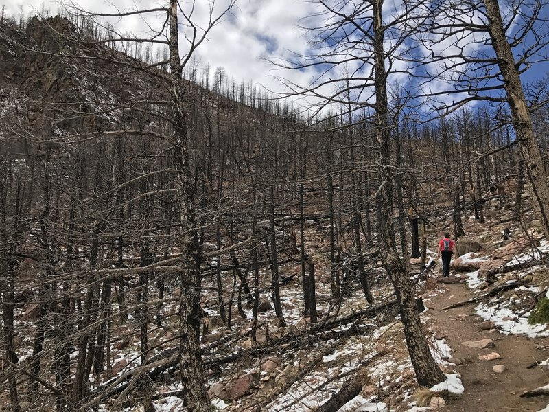 Shadow Canyon offers an interesting look at a standing dead forest left as the remains of a forest fire.