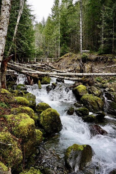 This is another view of the troll-guarded bridge across Skinwood Creek.