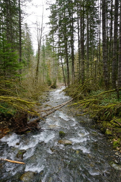 Just a few hundred yards upstream from Big Creek Campground, enjoy this phenomenal view of forest and flowing water.