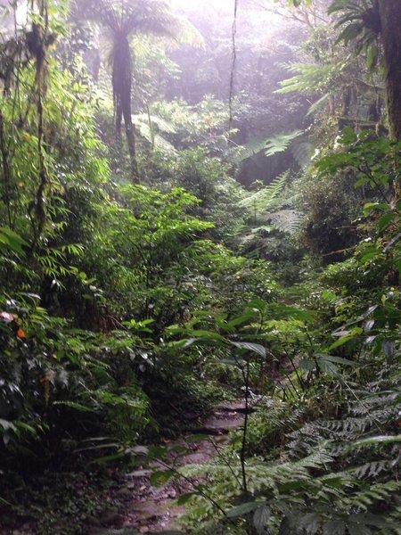The Itupava Trail traverses dense rainforest.
