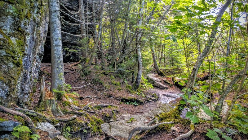 Toward the base of Mount Mansfield, the Sunset Ridge Trail traverses thick forests rife with roots and rocks.