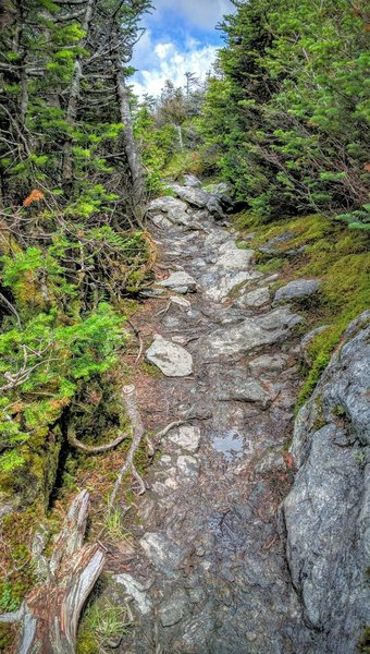 About 85% of the way up the Sunset Ridge Trail, you'll have to navigate this rocky bit that winds through short evergreens. While the trees block the view of the summit, you'll be rewarded with expansive views from the top!