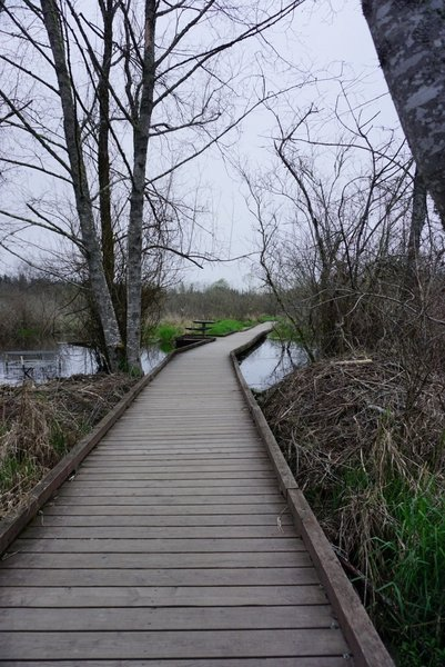 Floating pathways aid your passage over uneasy ground and water along the Clear Creek Trail.