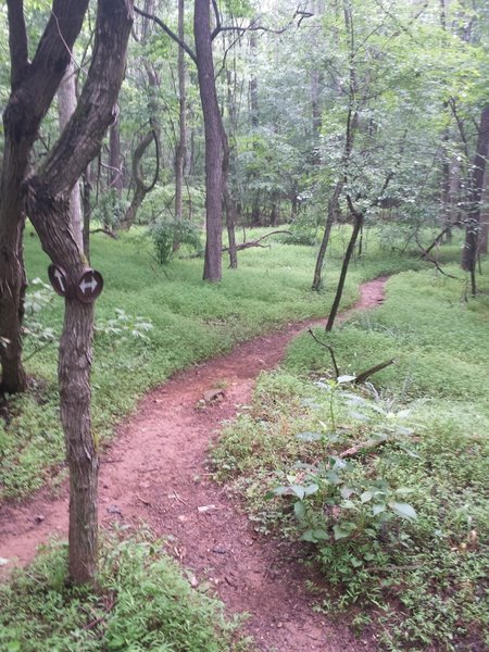 Lowlands Loop starts with this smooth, winding singletrack.