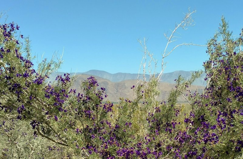 Mountains loom in the distance from the Anza-Borrego Desert State Park Visitor Center.