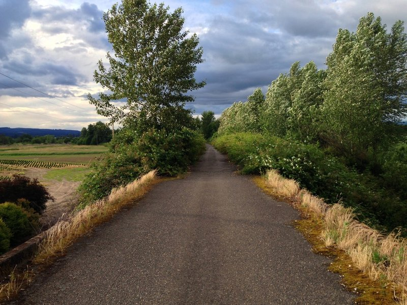 Between Scappoose and Chapman Landing, the Crown Zellerbach Trail crosses over Dike Road on an old logging bridge.