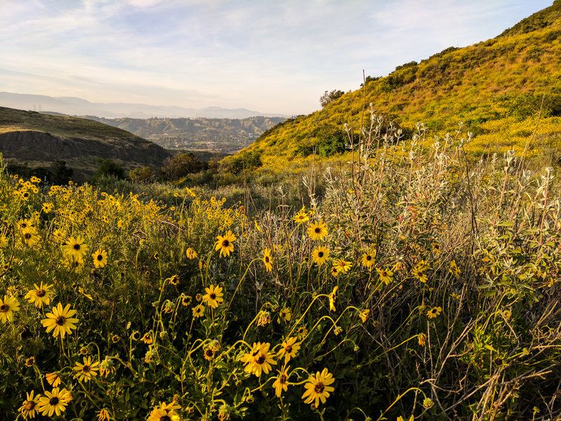 Spring wildflowers and sage present themselves along the trail.