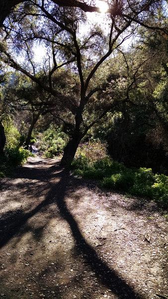 Riparian woodlands adorn Sycamore Canyon.