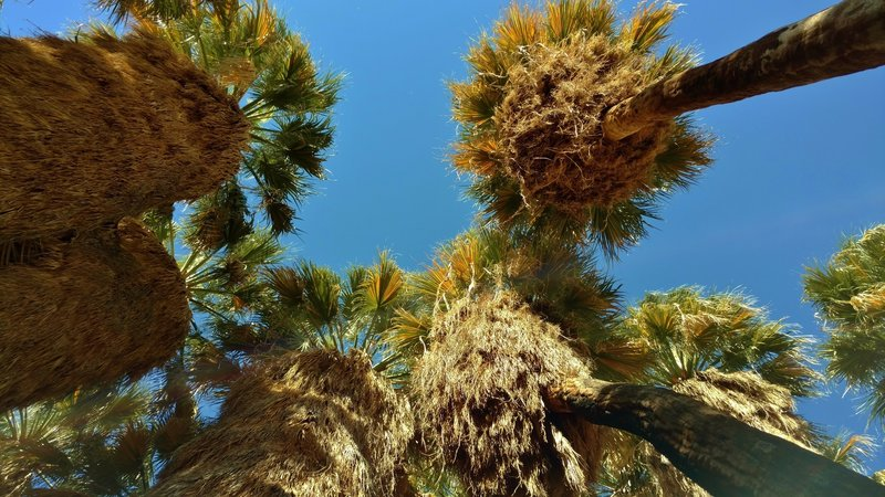 You'll remember looking up at the tall palms of the Palm Canyon oasis for a long time after your visit.