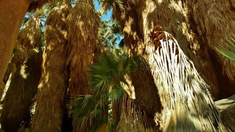 In the cool shade of the Palm Canyon oasis palms, you'll receive a welcome relief from the desert heat.