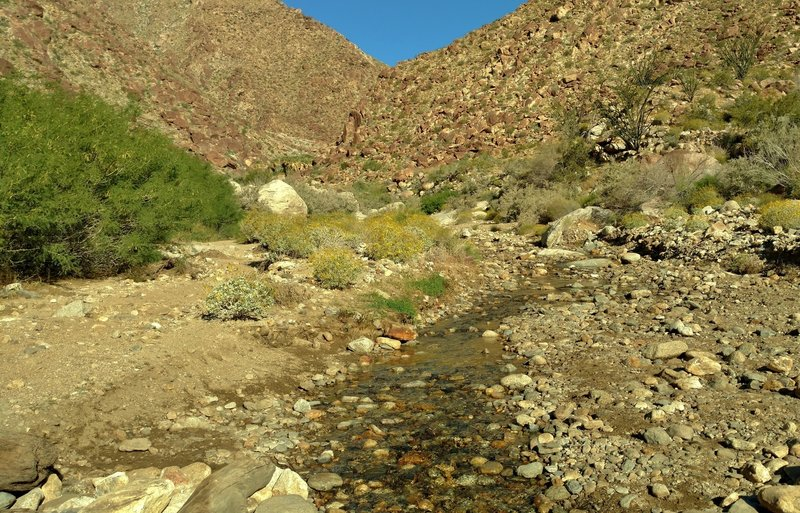 When crossing the stream that runs down Palm Canyon, one can see the palms of the Palm Canyon oasis in the distance.