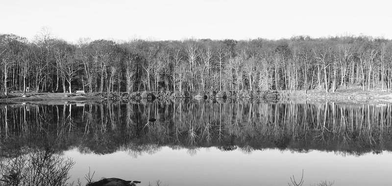 Peaceful mornings at Saffin Pond are coveting things.